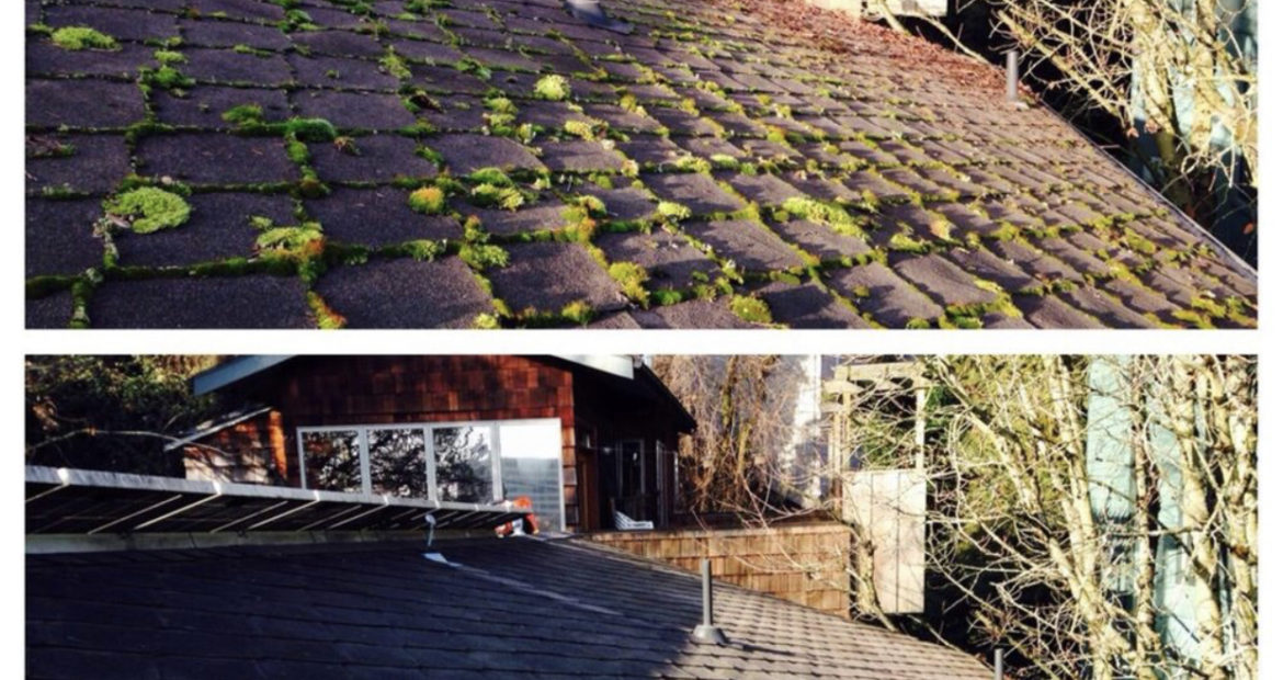 Roof Moss Removal Near Me Bothell